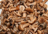 Сколько варить грибовницу