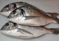 Сколько варить рыбу дорадо