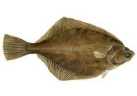 Сколько варить рыбу дори